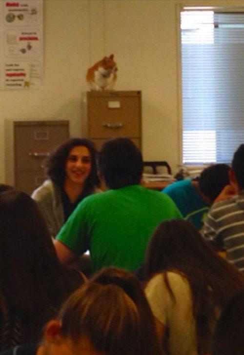 毎日高校に通う猫09