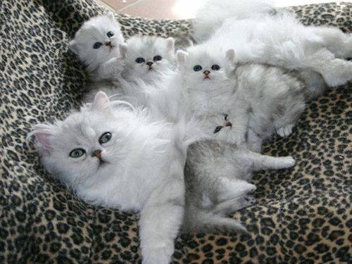 自慢の子猫たち17