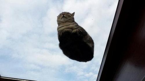 ガラスの上の猫02