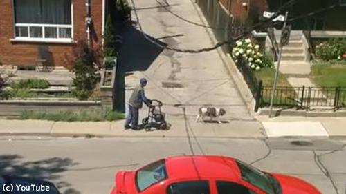 老人と散歩する犬03