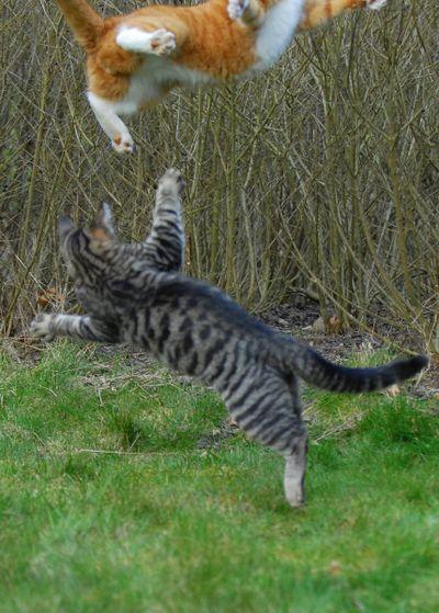 壮絶なる2匹の猫10