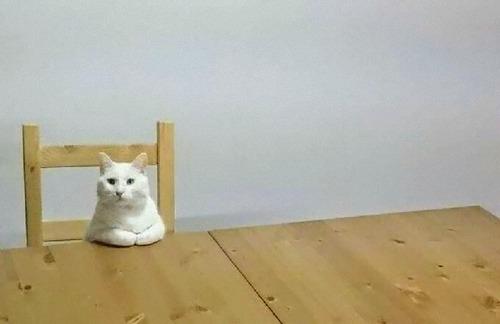 猫会議01