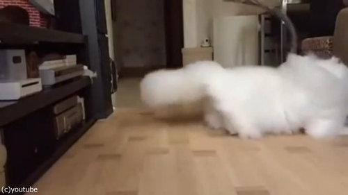 綿毛のような猫02