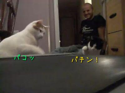 ルームランナーに猫パンチを叩き込む猫2匹
