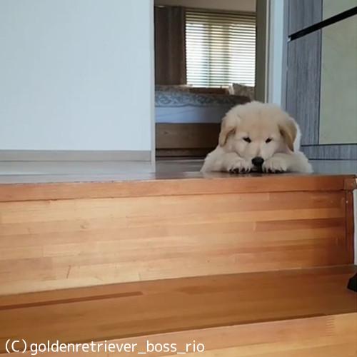 苦手な階段どうする?03