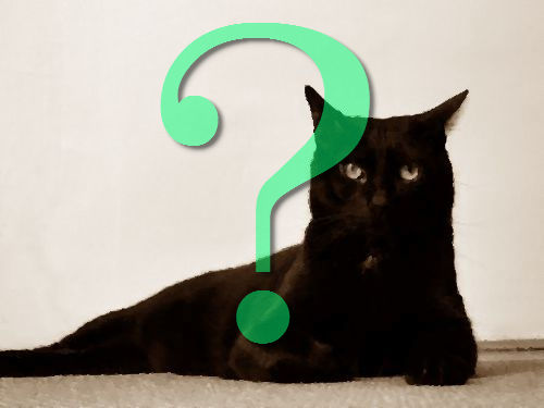 就職したら猫が変わった00