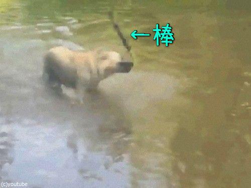 犬のスゴ技00