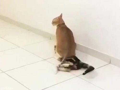 猫 「助けて〜」02
