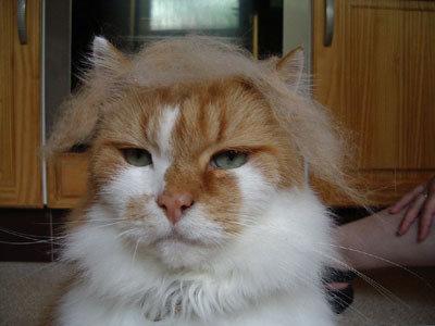 ブラッシングした猫の抜け毛をかつらに13