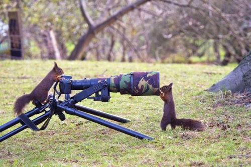 カメラマンな動物17