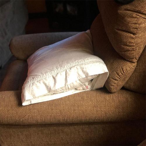 猫はどこでも寝る08