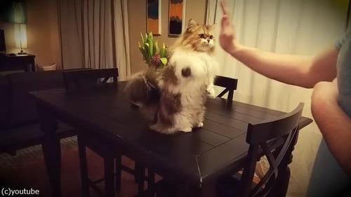 ハイタッチしてくれる猫様02