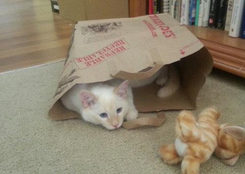 猫が「スパイvsスパイ」07