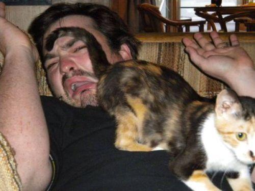 猫の恐怖00