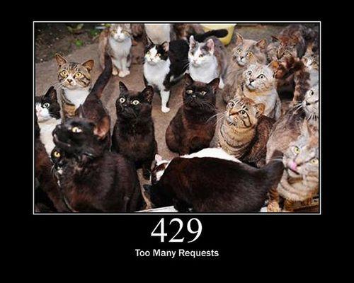 猫でHTTPステータスコード20