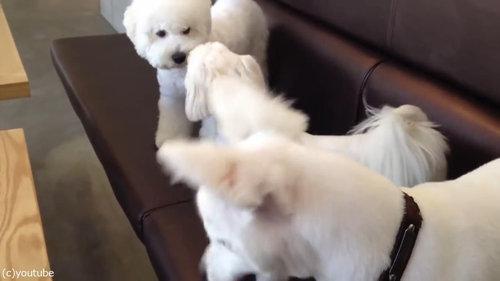 ケンカを始めた犬2匹と仲裁する1匹07