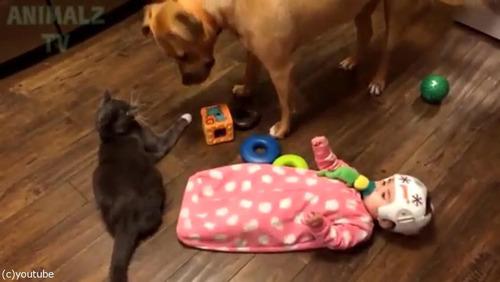 赤ちゃんに蹴られた猫、犬に八つ当たり02