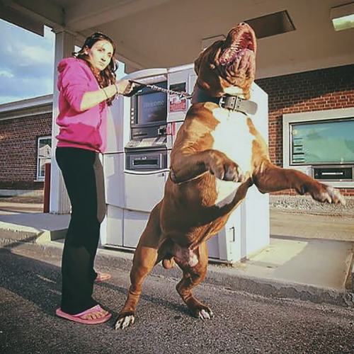 海外のATMと犬10