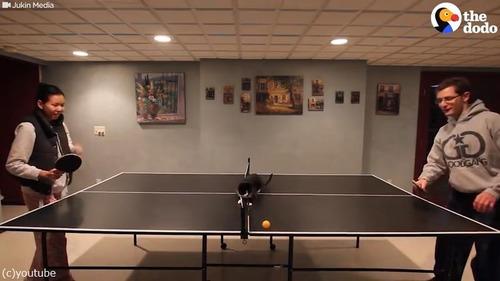 卓球ねこ01