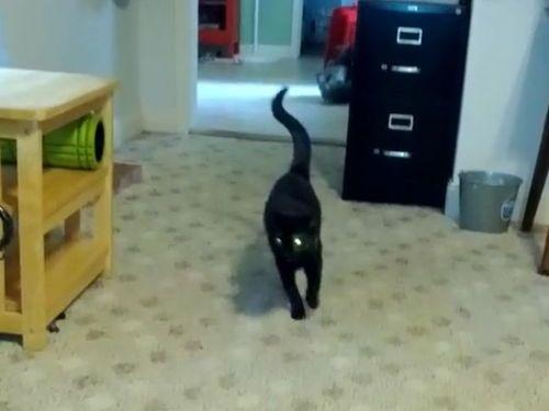 オシャレな歩き方の猫01