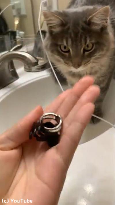 大変!流しに指輪を落としてしまった→猫が大活躍03
