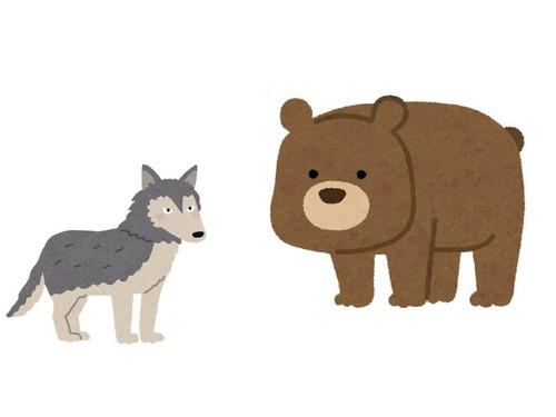 オオカミとクマ00