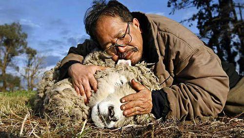羊をペット01