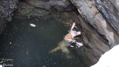 井戸に落ちた犬の救出劇04