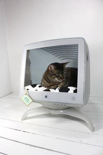 iMacと猫10