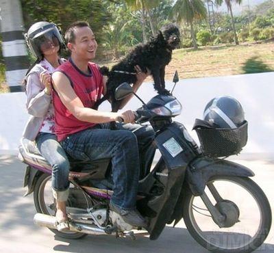 自転車やバイクに乗る犬たち06