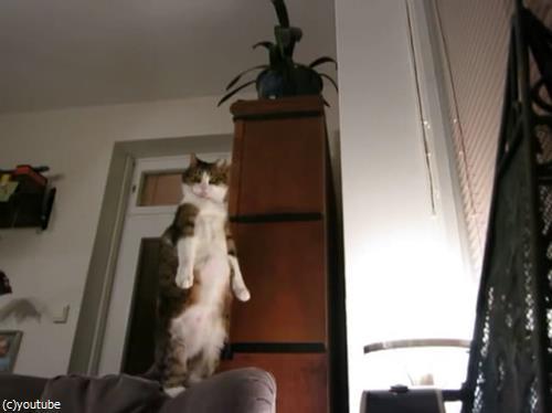 猫のストレッチをいろんな角度から眺めてみた08