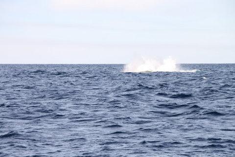 クジラウォッチング02