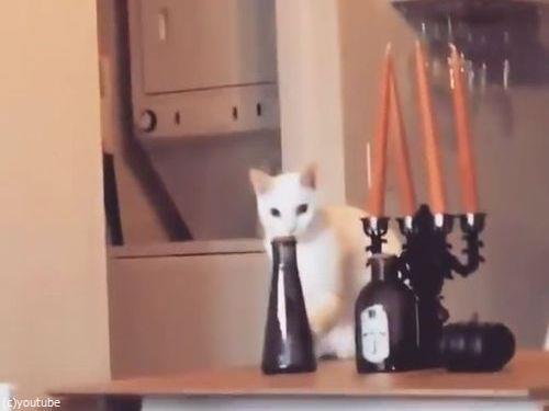 そっと動かして、そっと戻す猫(動画)00