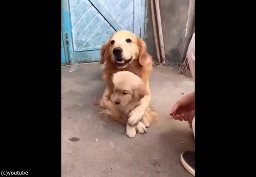過保護な犬06