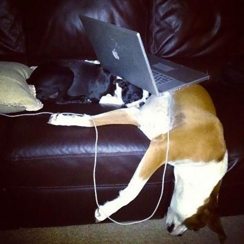 疲れ果てた犬と猫10