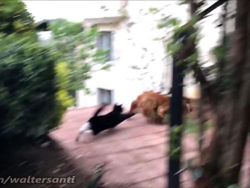 庭に入れさせない猫vs入りたい犬04