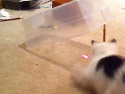 猫に罠をかけてみた01