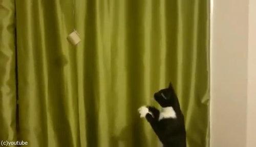 魔法を使いたい猫03
