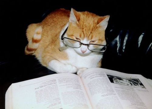 読書猫06