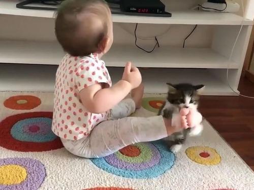 子猫が赤ちゃんに挑む00