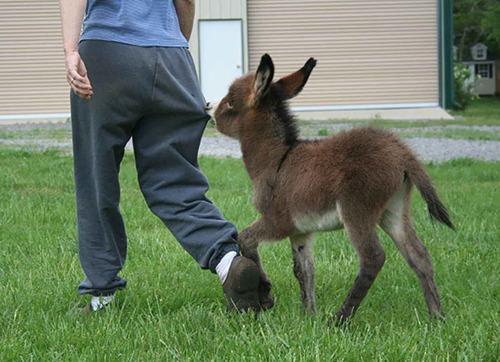 ロバの赤ちゃん11