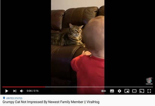 赤ちゃんとの出会いを喜んでない猫