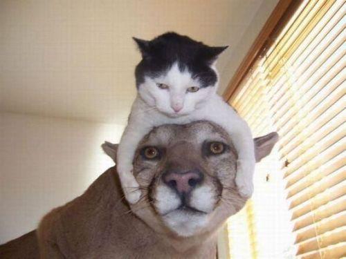 猫を頭乗せ11