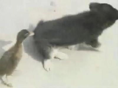 仲の良い動物たち