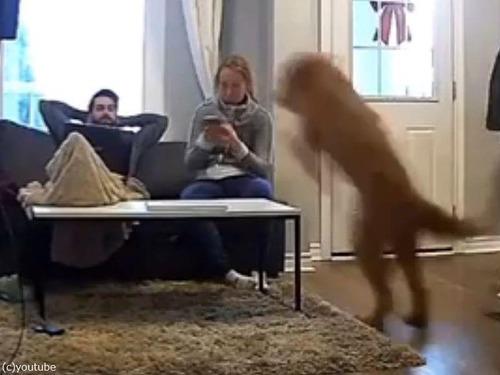 子犬の気持ちの大型犬01