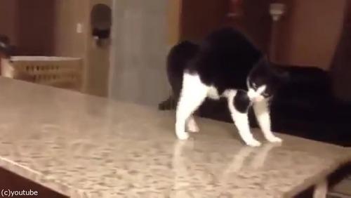 「この猫に…何が起きてるの!」05