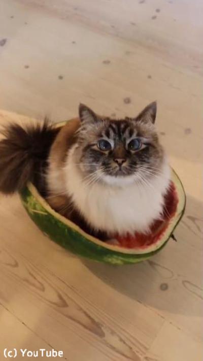 猫、夏ならではのベッドを発見02