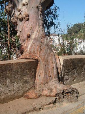凄い木17