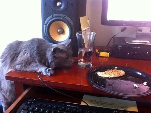 泥棒猫13
