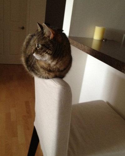 バランス猫04